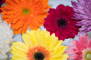 Brightly colored gerbera daisies floating in clear water | | Heidi McBain, Women's Counselor & Online Therapist in Flower Mound, Texas